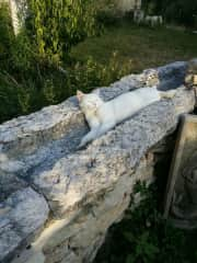 Farm cat, Matilde, after her daily hand-out.