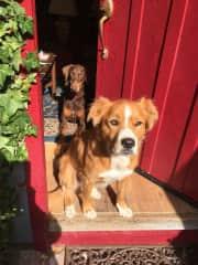Honey Bear & Coco enjoying the sun