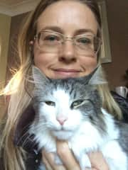 A grand British cat named Fidget