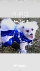 This is Sugar when she won the Halloween contest as a cheerleader