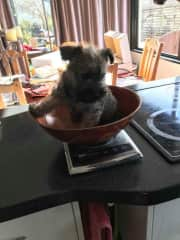 Patsy's first weigh in- 3.5kg