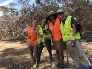Hugo, the farm dog who helped us put up some new fences at a farm in Kangaroo Island, SA after the devastating bush fires