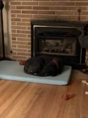 Buckley sleeping in front of fireplace