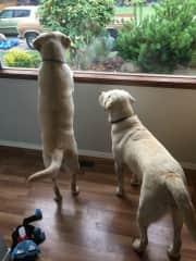 Ella and Edison