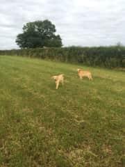 Our favorite British doggies!!!