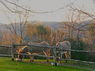 Orazio and Pandora at sunset in their paddock
