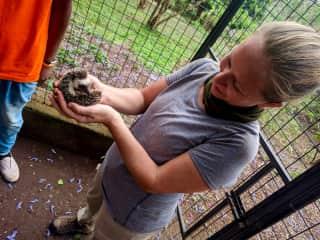 Rachel holding a rescued hedgehog @Kilimanjaro Animal C.R.E.W. Rescue