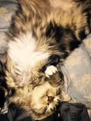 my kitty Carson