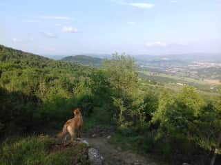 Looking after Kahlua , my friend Lone's Dog, whilst house sitting for her in Umbria May 2018