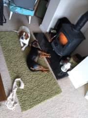 Harry and Bo really like the heat of the cozy stove
