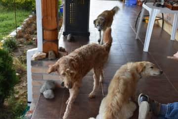 Goldie, Jazz and Feilpo