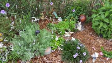 Perennials in my B&B / Bed & Breakfast for Butterflies, Bumble Bees & Hummingbirds