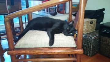 Roosie at rest