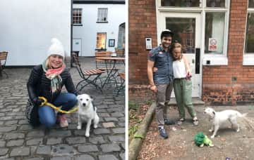 Abra and our housesit for Katka in Dublin