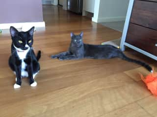 Oreo and her sibling Saraha who lived with us for 3 months with his owner