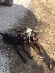 My rescued doggies quite content.