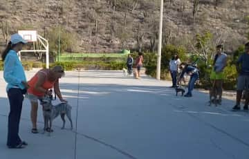 Teaching a class of foster dogs/parents for Baja Dogs La Paz Mexico Rescue Group