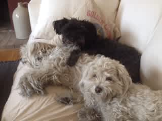 Blanca and Ocho with friend