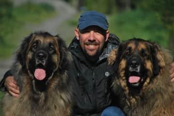 Three fuzz faces in Christchurch, NZ