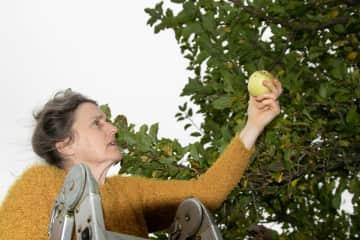 Margaret inspecting the apple crop.