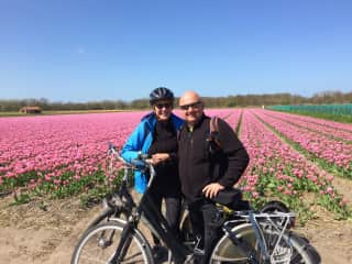 Cycling through the the tulips, Netherlands