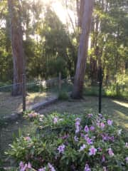 Some of the garden and bush at our house.