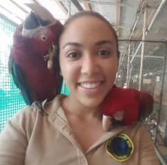 Two of the macaws I worked with everyday called Carrot and Saheena