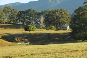 House sit :-Beef cattle farm in Tweed Valley. NSW