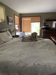 king size bed that Woody and Ellie both enjoy