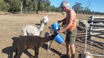 First try feeding Llamas