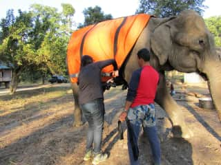 January 2020 fitting Roop Kali with a blanket to keep her warm, an 80-year-old government elephant in Nepal.