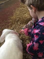 Abigail patting the lamb