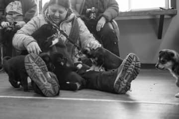 I was visiting a kennel and all the puppies came to play with me at the same time. I was the puppy magnet that day.