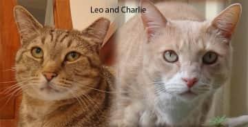 Leo and Charlie, Lisarow New South Wales