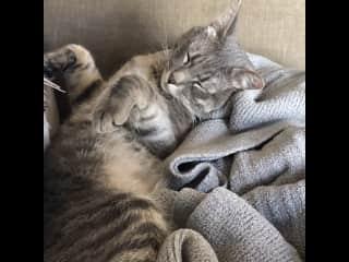 Jeoffrey snoozing on his blanket