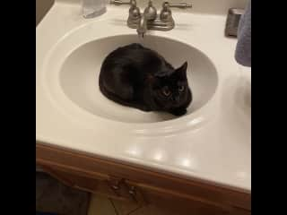 She loves drinking water from the faucet (and sometimes taking a breather in the sink)