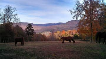 Our view and horses, my therapy ;)