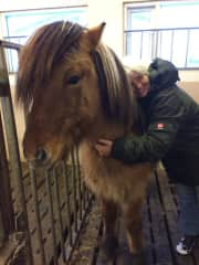 My favorite horse from the whole pack, he is small, his name is tiger and he sure is one!!