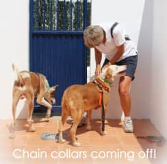 Taking the chains off newly rescued dogs