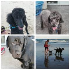 In the Sunshine Coast with Rudi, Dash and Maverick