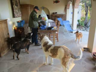 Jan feeding the 4 dogs of a housesit in Spain