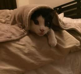 Romeo hiding