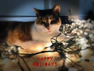 Kittie helped us out on our holiday card.