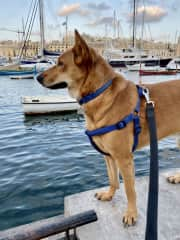 Taking our dog Angel for a walk in Malta