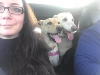 Taking fur babies to the dog park.