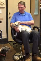 Al with friends dogs when getting a hair cut