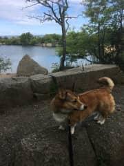 Tucker on a hike near Gloucester, MA
