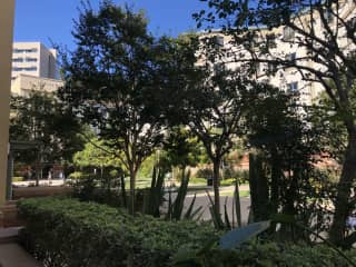 View of campus courtyard from our patio