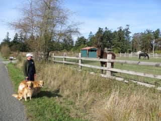 Dog walking is great. Here we are on a housesit in Port Townsend, Washington.