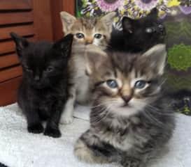 Foster kittens!
